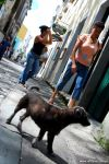 2007_07_03_Salvador_017_small_color.jpg