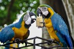 Cartagena-Colombia-city-crusing-parrots.jpg